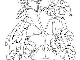 Plant Life Cycle Coloring Page Pumpkin Life Cycle Coloring Page