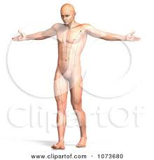 Acupuncture Chart Poster 3d Male Acupressure Acupuncture Chart Body 3 Posters Art