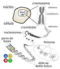 Resultado de imagen de Las estructuras fundamentales de la Naturaleza