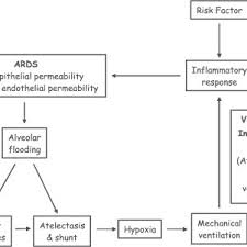 Ards Pathophysiology Flow Chart Current Schematic Of The Pathophysiology Of Ards Download