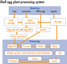 How To Create An Effective Haccp Plan For Shell Egg Plants