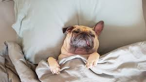 """Резултат с изображение за """"почивка на легло"""""""