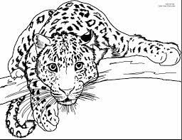 Good Realistic Cheetah Coloring Pages With Page And Cheetah