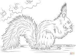 Small Picture Red Squirrel Eating Nut coloring page Free Printable Coloring Pages