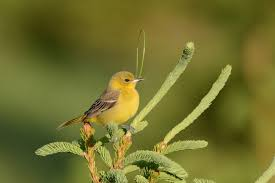 get out and enjoy nature it s time to venture out and enjoy nature and our spring birds