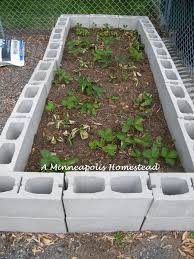 we finally finished building our concrete block raised beds and planting  our main garden about a