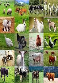 real farm animals collage. Modren Animals Farm Animal Collage Intended Real Animals Pinterest