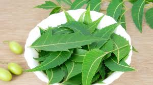 wonderful benefits and uses of neem a herb that heals ndtv food 10 wonderful benefits and uses of neem a herb that heals