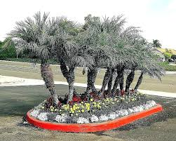 extraordinary palm tree landscape landscaping trees easy ideas for small backyards planted with desert types extraord