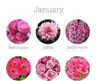 Month Flowers Chart Wedding Flower Chart By Month Pictures Photos And Images