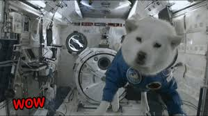 doge snow gif. Beautiful Doge Doge In Space Inside Snow Gif