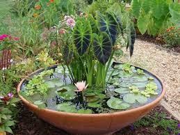 water shortage make a mini pond dave