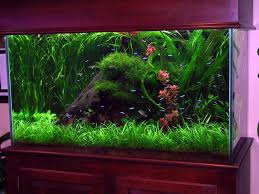 fish tank decorations turning brown fish tank decorations with incredible ideas whomestudio com home designs