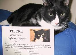Pierre the Cat's office mates at ARF (Tony LaRussa's Animal Rescue  Foundation) in Walnut Creek, California helped him draw up a resume and  list his skills, ...