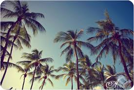 Concept Palm Trees Tumblr Vintage Beautiful B For Image To Design