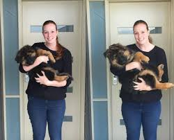Series Of Photos Chart German Shepherd Puppys Insane Growth
