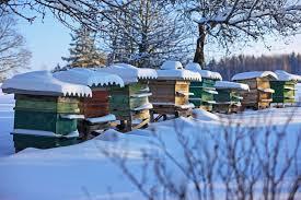 """Vaizdo rezultatas pagal užklausą """"beekeeping winter"""""""