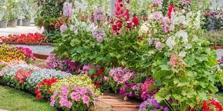 best garden plants. Best Annual Flowers Garden Plants