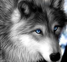 pin husky clipart wolf eyes 12