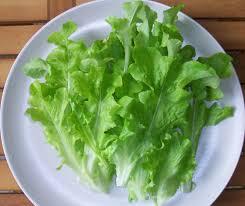 """Résultat de recherche d'images pour """"Quelle est l'origine de la salade ?"""""""