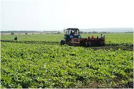 Сельское хозяйство татарстана Фермерство Как бизнес Сельское хозяйство image082