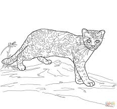 Small Picture Margay Cat coloring page Free Printable Coloring Pages