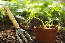 az-gardening-2