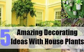 amazing decorating ideas amazing decorating ideas with house plants amazing office plants