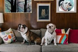 dogs we love how will you decorate