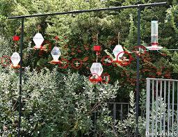 Small Picture 10 best Hummingbird Garden Plants images on Pinterest Garden