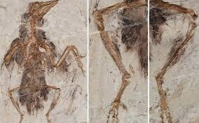 Αποτέλεσμα εικόνας για απολιθωμα