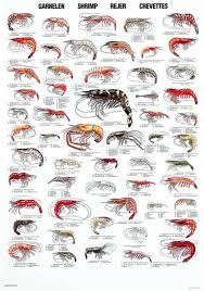 Crab Species Chart Shrimps 56 Of The Most Common Species Of Shrimp Worldwide