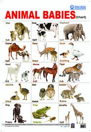 Buy Animal Babies Chart Book Online At Low Prices In India
