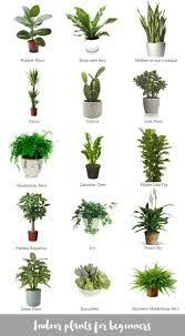 Extremely Low Light Plants Himalayanone Expeditions Himalayanone On Pinterest