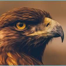 FREE HD WALLPAPERS - Eagle Wallpaper ...