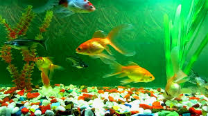 Fish Backgrounds Fish Wallpaper Hd 46 Images On Genchi Info