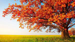 48+] Autumn HD Wallpapers 1080p on ...