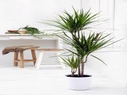 Tremendous Size X Small Palm Trees Plants Palm Trees Types Tropical Room  Small Palm Trees Plants