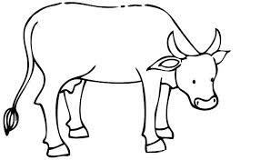 Cow Template Cow Outline Momchilovtsi Info