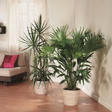 lighting for houseplants. proper light for houseplants lighting e