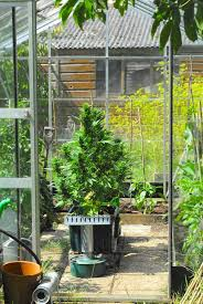 greenhouse auto growing auto s outdoor is easy