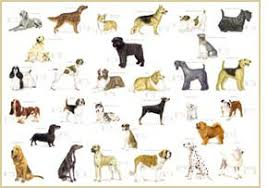 planet has an interesting dog breed selector answer a few questions and it gives you quite a few dog breeds in order of pliance with your