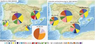mtdna haplogroup position of the prehistoric iberian groups abbreviations hunter gatherers in europe from the holocene hg hol northeast iberian