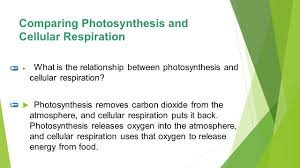 57 comparing photosynthesis and cellular respiration