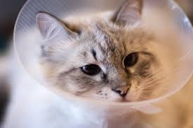 cat flu why is my cat sneezing
