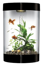 Cool Aquariums For Sale The 25 Best 10 Gallon Fish Tank Ideas On Pinterest 1 Gallon