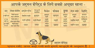 German Shepherd Puppy Food Chart German Shepherd Dog Breed Information Growth And Sale