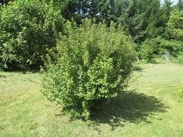 Plum Tree Not Fruiting  Home Decorating Interior Design Bath Plum Tree Not Producing Fruit