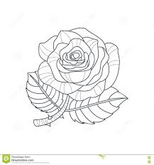 Libro Da Colorare Di Rose Flower Monochrome Drawing For