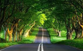Tree Wallpapers - Top Free Tree ...